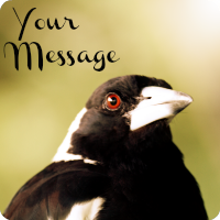 my-message