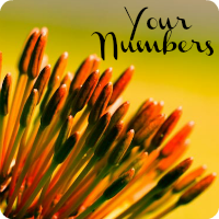 my-numbers